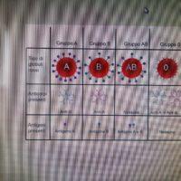 inglese primaria (2)